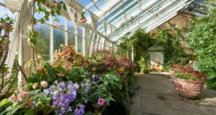 die-richtige-luftfeuchtigkeit-laesst-pflanzen-besser-gedeihen