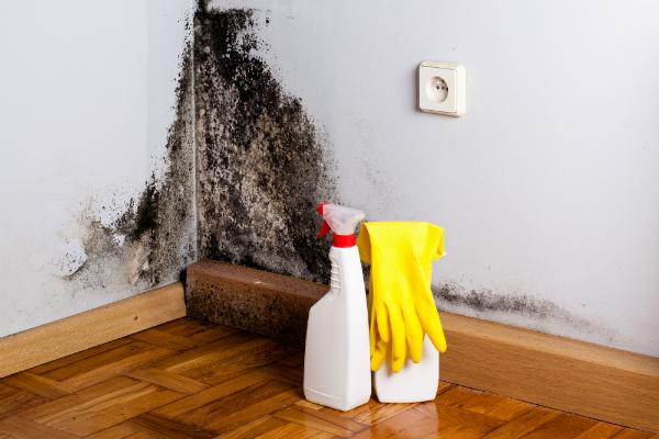Feuchte Wände fördern die Schimmelbildung