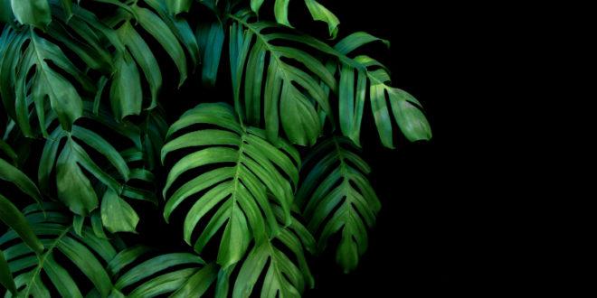 Luftfeuchtigkeit durch Pflanzen erhöhen - BRUNE Magazin