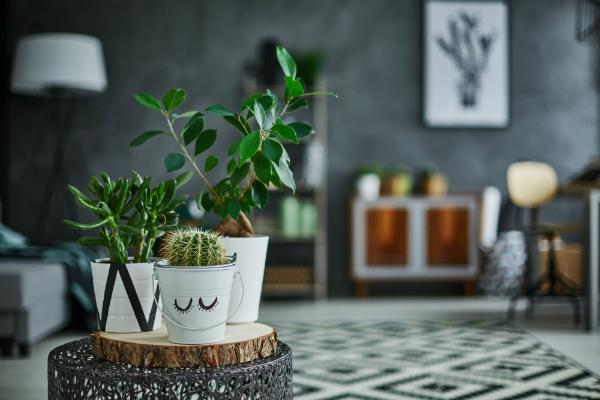 Zimmerpflanzen steigern die Luftfeuchte