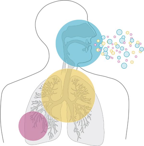 Staub gelangt in die Bronchien