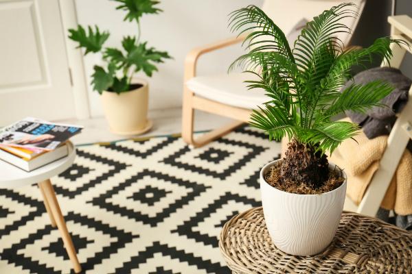 Zimmerpflanzen in stylischer Einrichtung