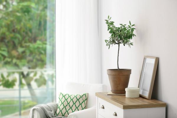 Auch Pflanzen koennen bei zu trockener Luft in Mitleidenschaft gezogen werden