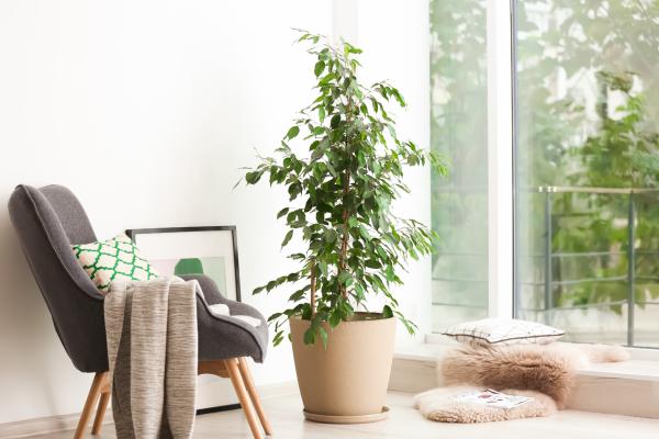 Zimmerpflanzen speichern Feuchtigkeit