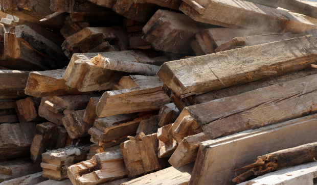 Befallene Holzteile sollten entfernt werden