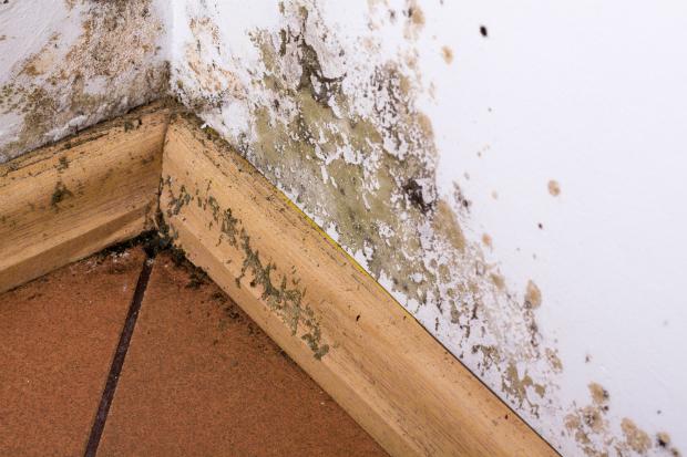 Schimmel ist oft der Grund für modrigen Geruch in Wohnräumen