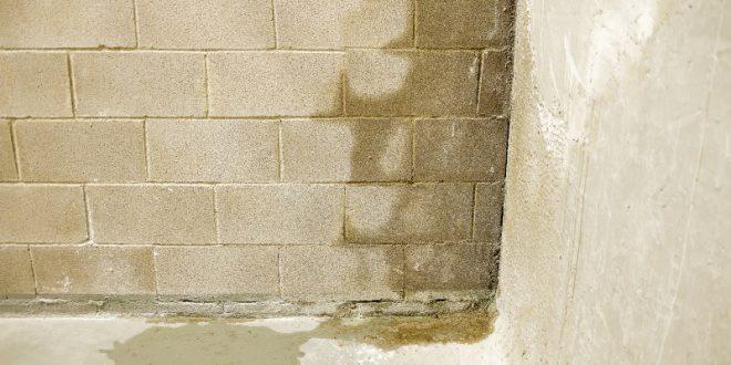 Feuchtigkeit Im Mauerwerk Beseitigen : feuchtes mauerwerk brune magazin ~ Watch28wear.com Haus und Dekorationen