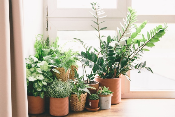 zimmerpflanzen-wasser-raumluft