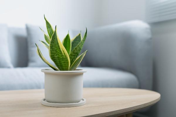 Gute Wohnraumluft ist moeglichst schadstofffrei