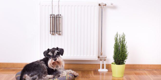 Hund sitzt an Heizung mit Luftbefeuchter