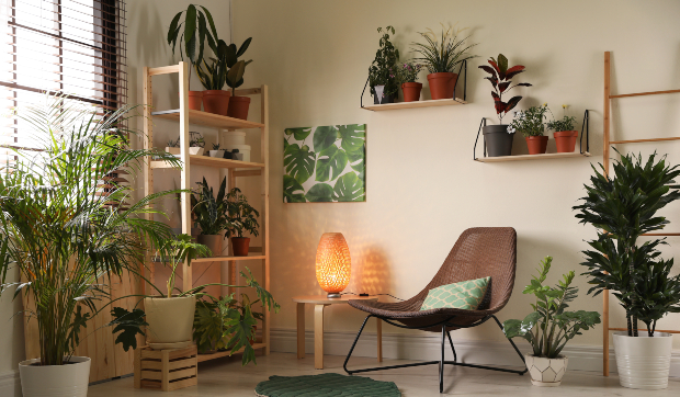 Wohnraum mit vielen Pflanzen - natürlicher Luftbefeuchter für Wohnzimmer