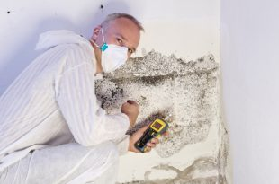 Mann analysiert Schimmel an der Wand - Schimmel am Arbeitsplatz