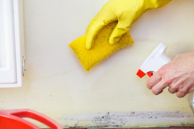 Schimmelbefall wird mit Schwamm und Spray bekämpft