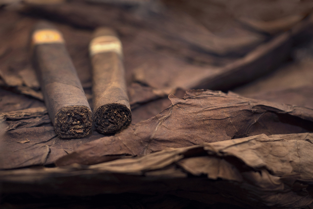 Zigarren auf Tabakblättern