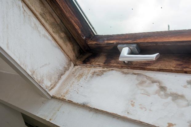 Fenster - Brauner Kellerschwamm