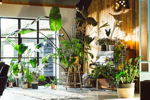 Wohnung mit sehr vielen Grünpflanzen