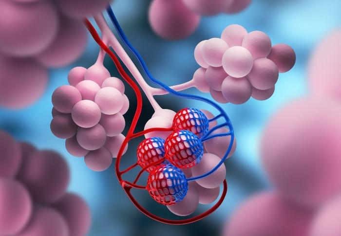 alveolen-lungenblaeschen-luftbefeuchter-bei-copd-einsetzen