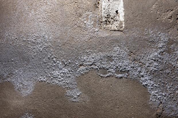 Mauersalpeter an der Wand