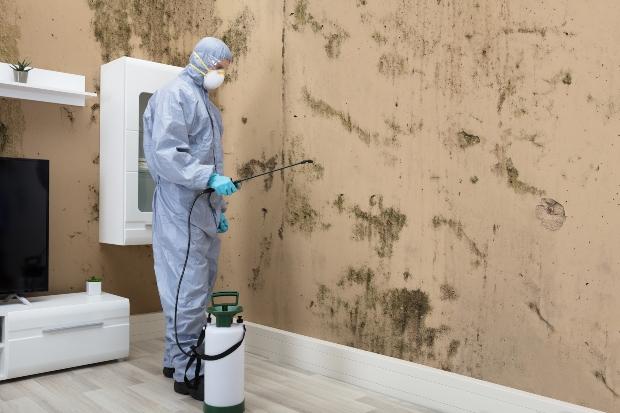 Profi entfernt große Schimmelflächen an der Wand - der Schimmelgeruch wird so auch verschwinden