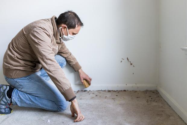 Mann schaut auf großflächige Schimmelflecken in einer Wohnung - Schimmel auf Teppich und Tapete