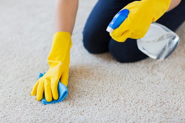 Frau reinigt Teppich mit Schwamm und Reinigungsmittel - Schimmel auf Teppich entfernen
