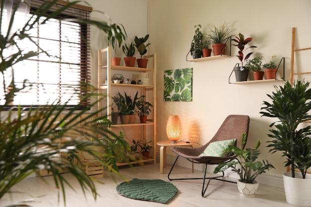 Wohnraum mit vielen Pflanzen - Luftfeuchtigkeit im Winter wird dadurch erhöht