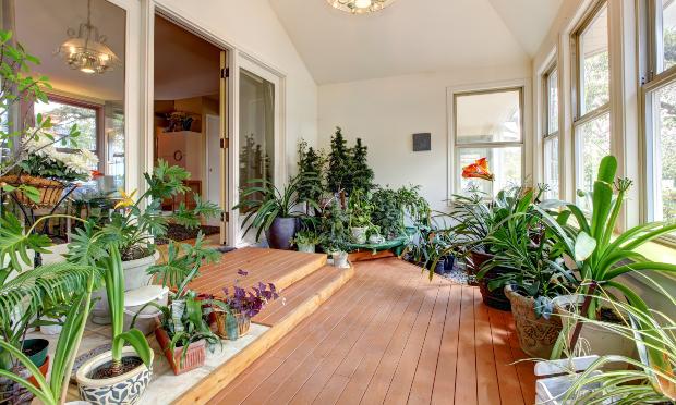 Viele Grünpföanzen in einer Wohnung